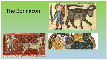 bonnacon